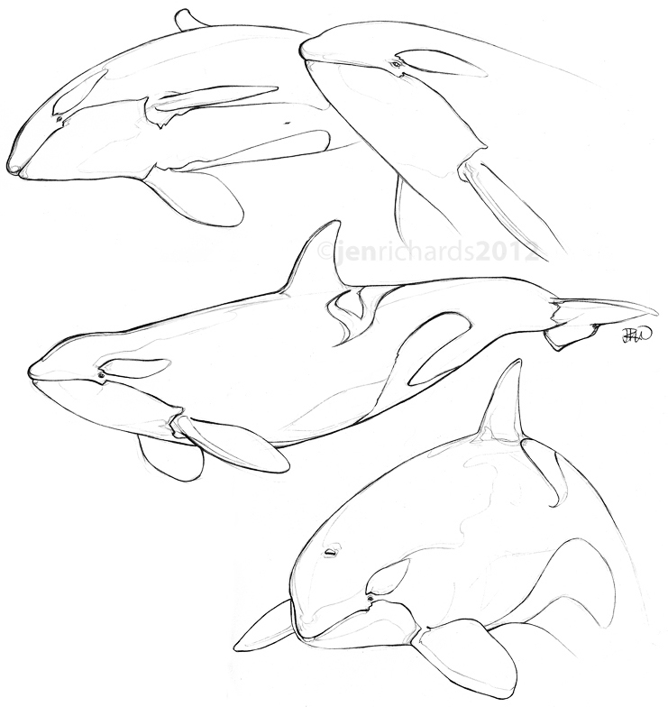 741x784 Orca Drawing Category Archives Sketches Embroidery