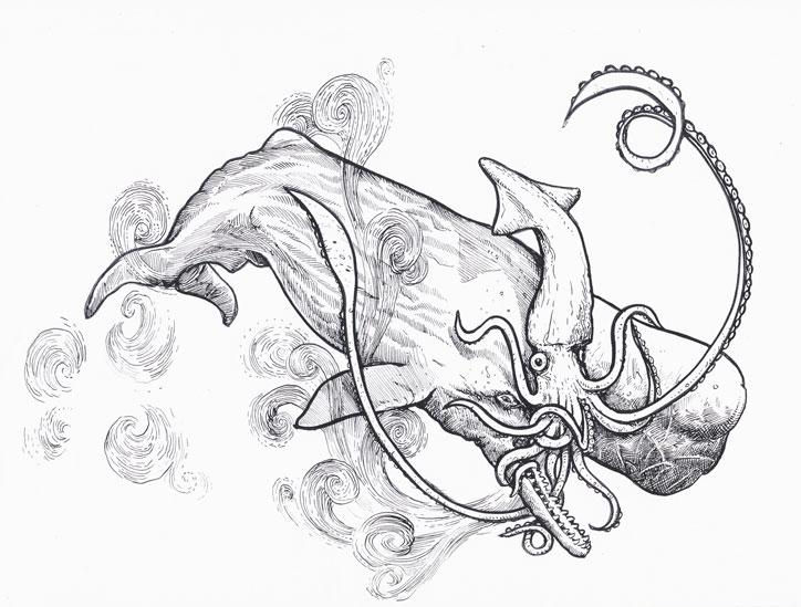 724x549 Squid Vs Whale
