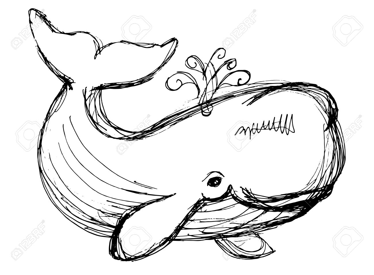 1300x957 The Whale Drawing. Hand Drawn Illustration With Whale. Animal