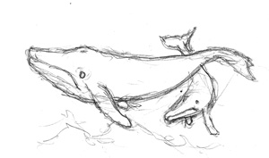 300x177 Vague And Catchy. Fish For Drawing Humpback Whale