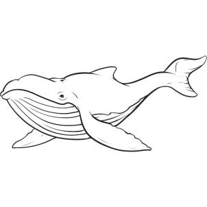 302x302 How To Draw A Whale Step 7 Coastal Drawings