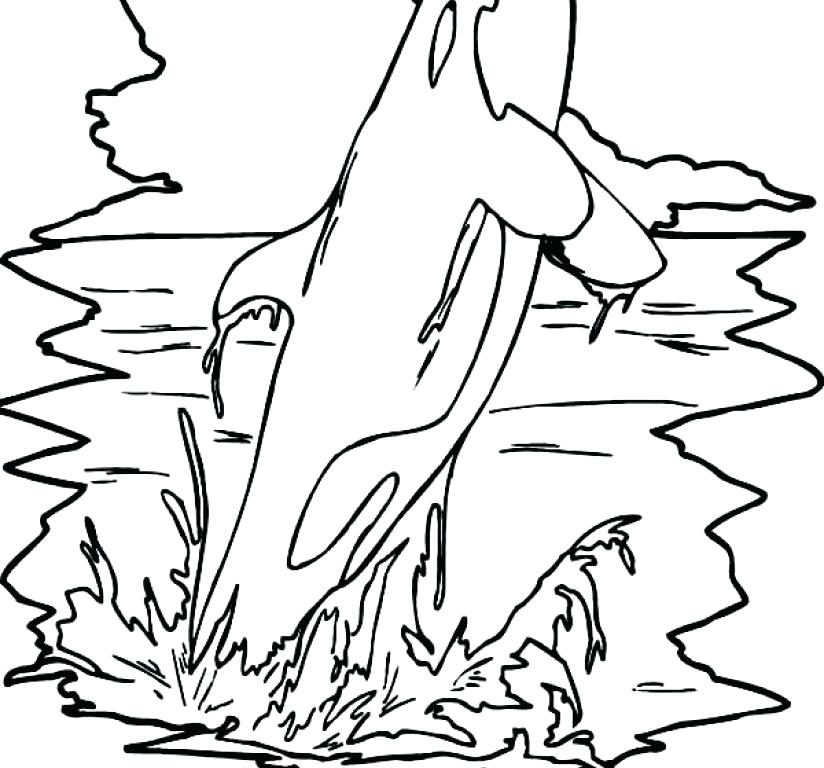 Whale Drawing For Kids at GetDrawings.com | Free for personal use ...
