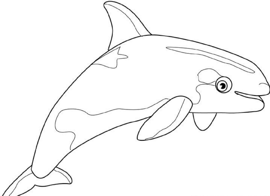 900x653 Killer Whale Coloring Pages Colouring For Sweet Page Draw