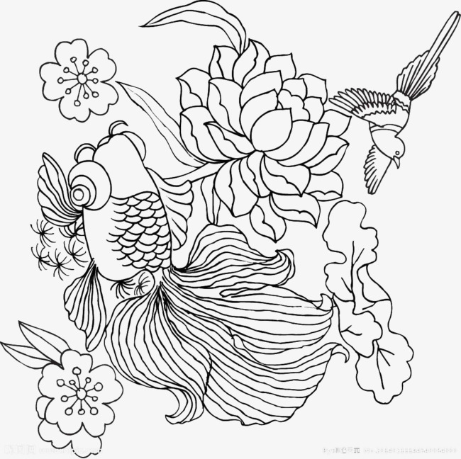 650x648 Line Drawing Whale, Line Drawing, Whale, Flowers Png Image