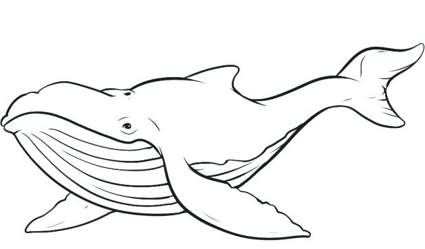 618x362 Sperm Whale Coloring Page Sperm Whale Line Drawing Coloring Pages