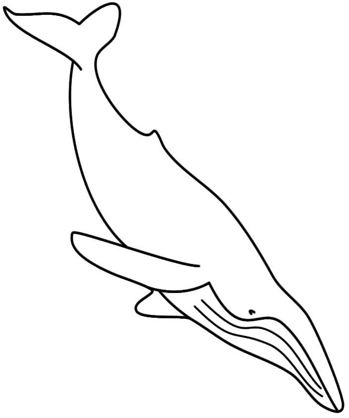 704x843 Whale Coloring Pages