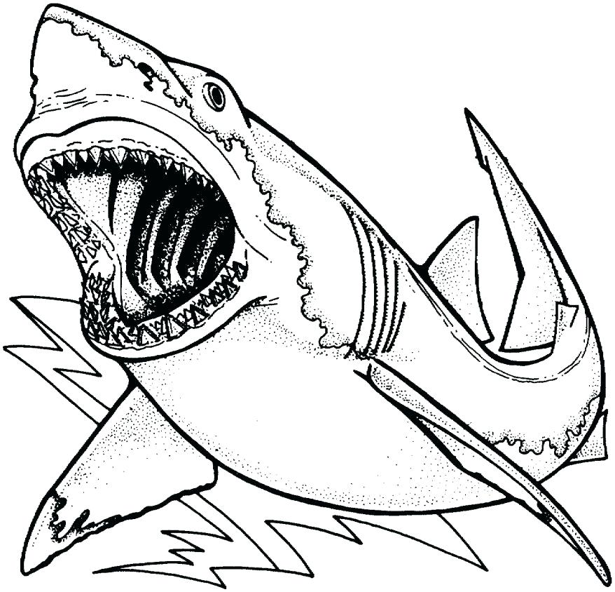 878x844 Whale Shark Coloring Pages Pin Whale Shark Line Drawing 1 Whale