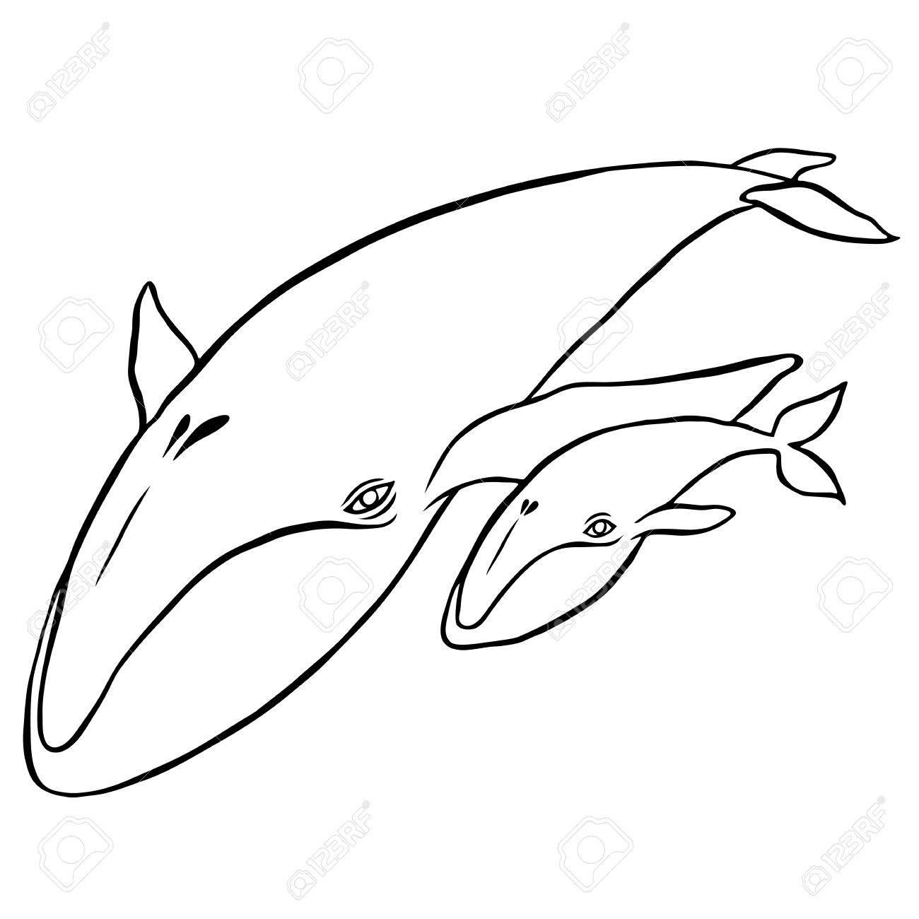 1300x1300 Blue Whale