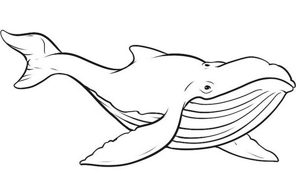 600x352 Picture Of Blue Whale Coloring Page Elliot's Room
