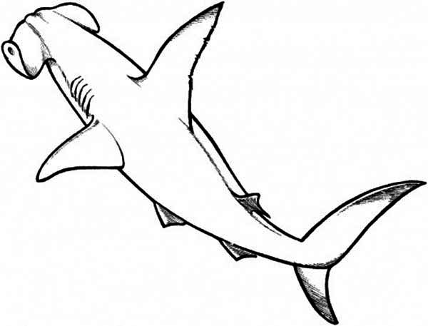 600x457 A Drawing Of Hammerhead Shark From The Top Coloring Page Kids