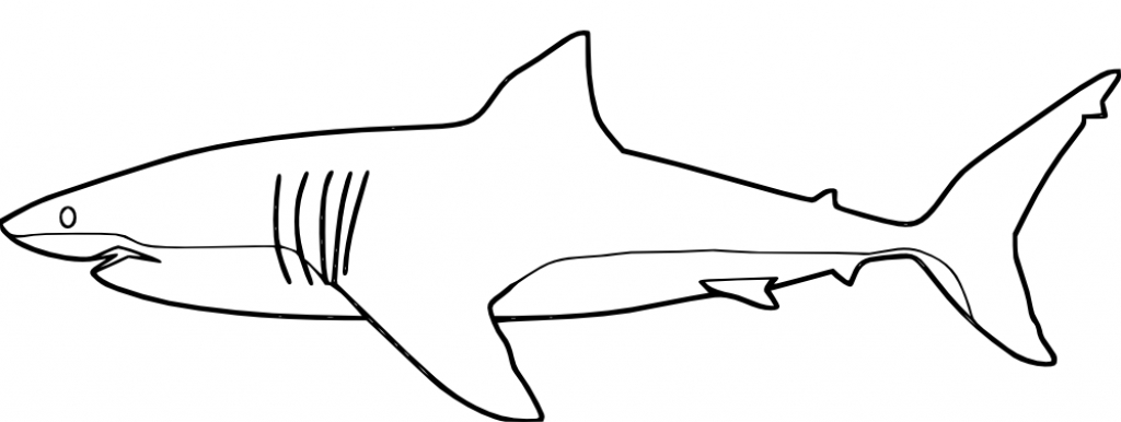 1024x386 Coloring Pages Sharks Colouring Pages Kids Whale To Print Shark
