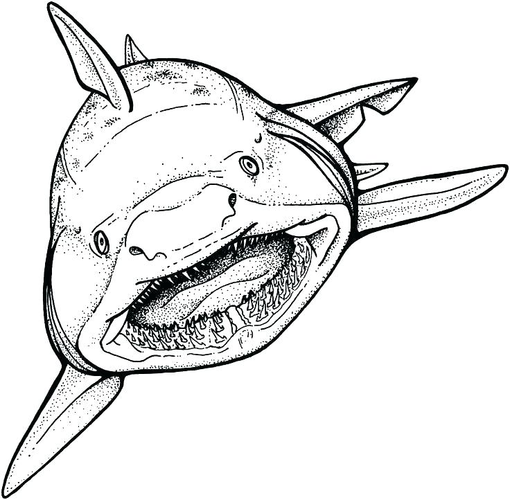 736x722 Free Shark Coloring Pages Free Shark Coloring Pages Coloring Pages