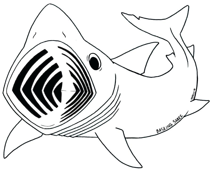 900x724 Whale Shark Coloring Pages Ocean Coloring Pages Coloring Books