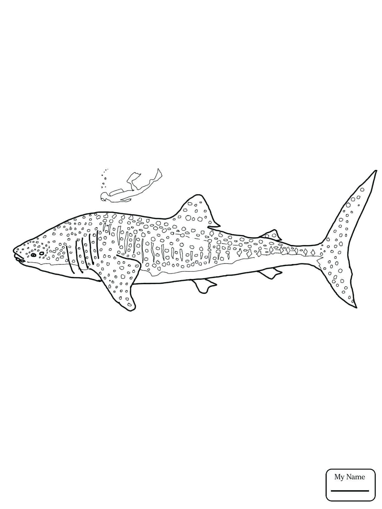 1224x1632 Coloring Realistic Shark Coloring Pages Whale Page Great White