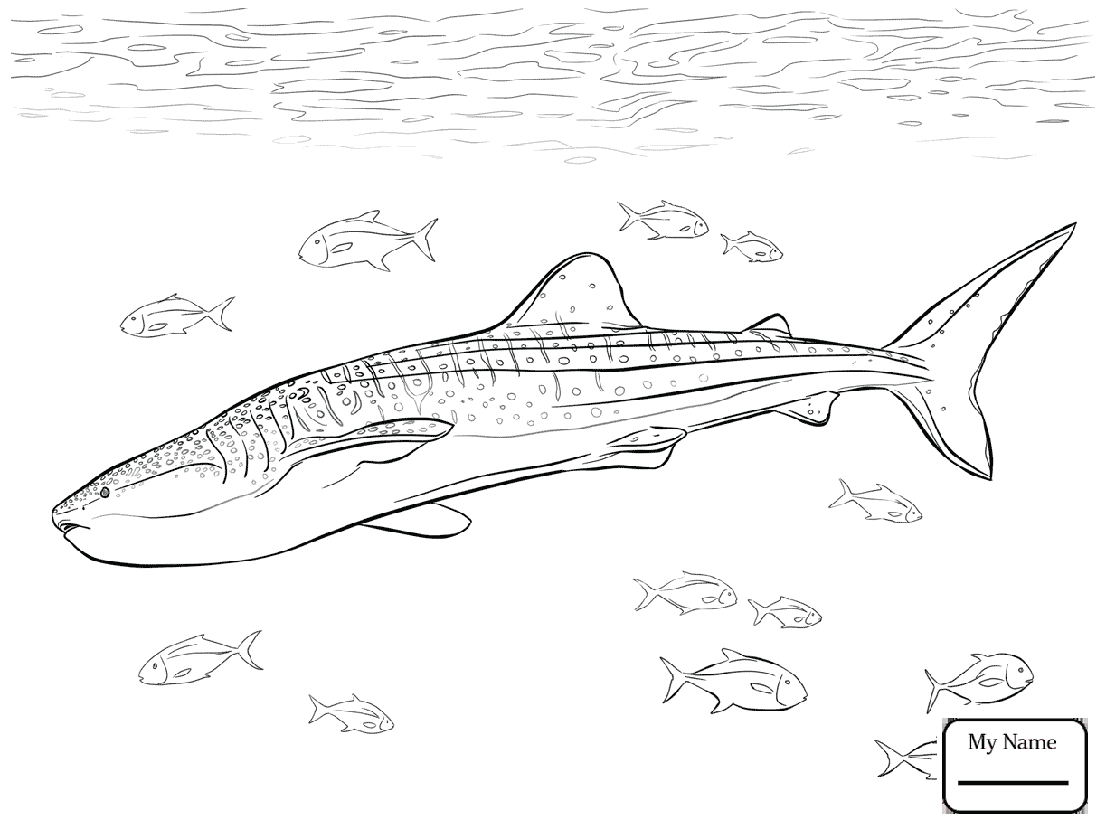 1223x917 Coloring Pages For Kids Realistic Whale Shark Fish Whale Sharks