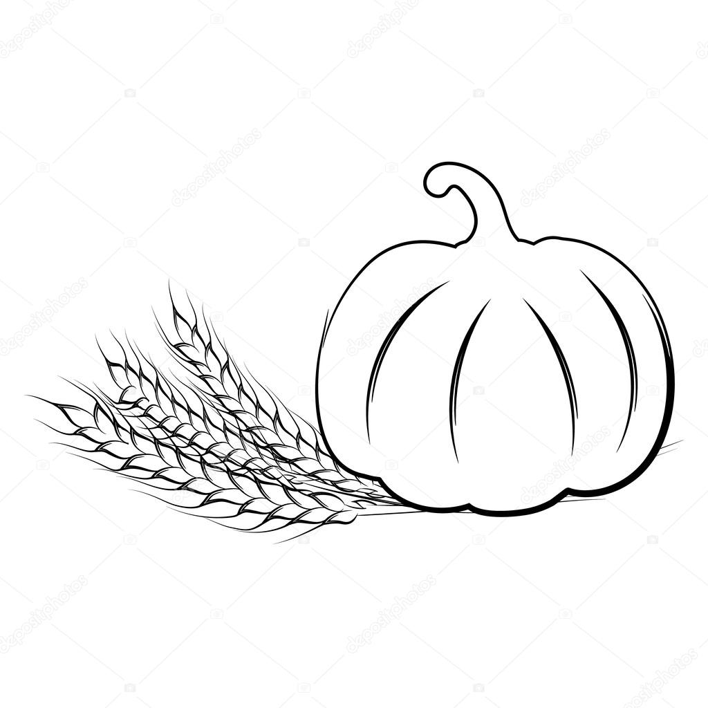 1024x1024 Vector Illustration Of Hand Drawing Ripe Pumpkin And Wheat Ears