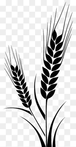 The Best Free Wheat Drawing Images Download From 50 Free Drawings