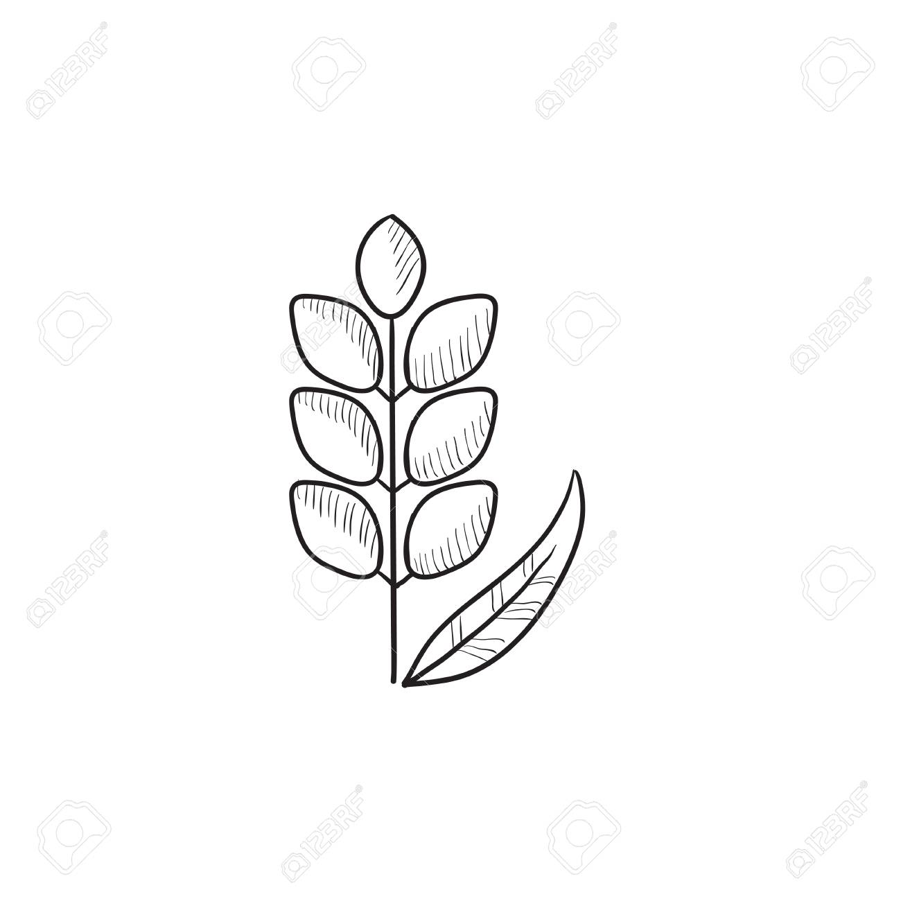 1300x1300 Wheat Vector Sketch Icon Isolated On Background. Hand Drawn Wheat