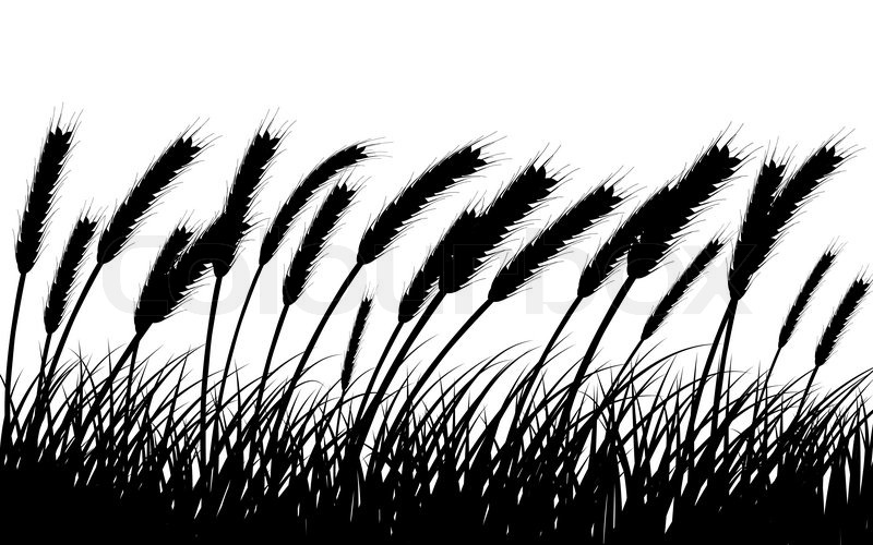 Line Drawing Grass : Wheat drawing at getdrawings free for personal use