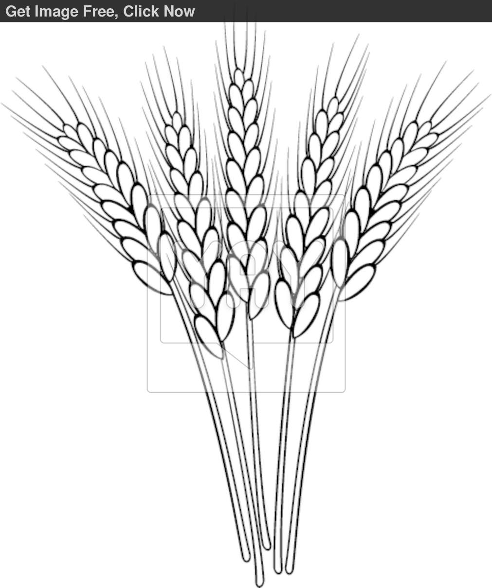 coloring pages on wheat - photo#13