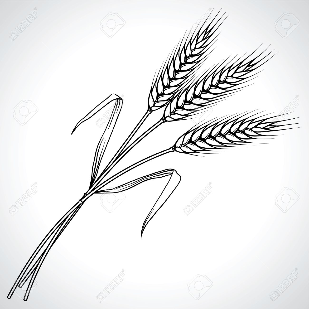 1300x1300 Ripe Black Wheat Ears Isolated Illustration Royalty Free Cliparts