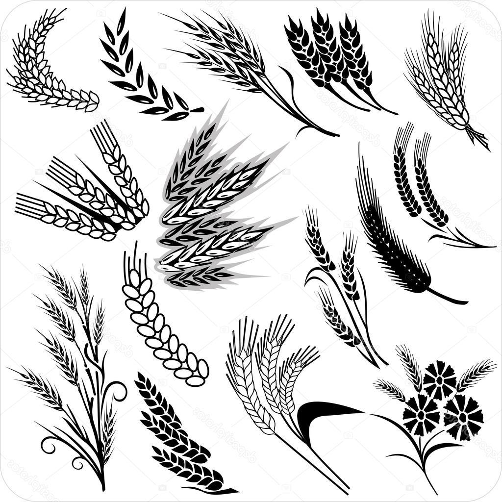 1024x1024 Top 10 Stock Illustration Wheat Ears Collection Library