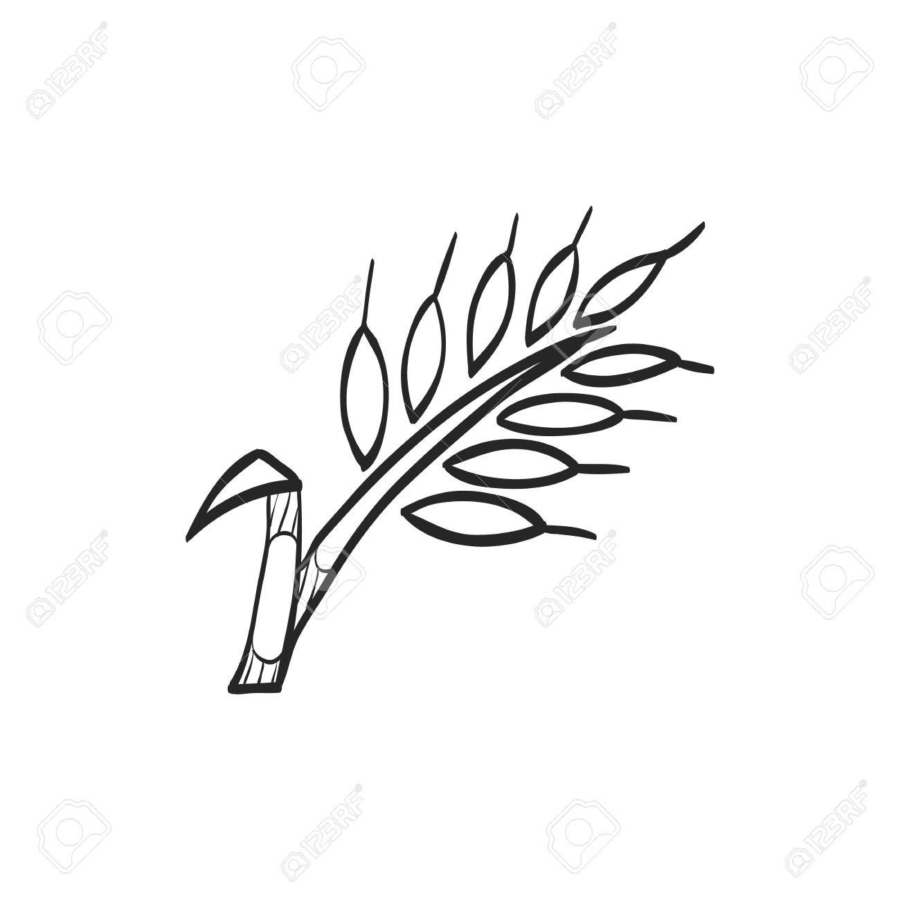 1300x1300 Wheat Icon In Doodle Sketch Lines. Cereal Seeds Baking Gluten