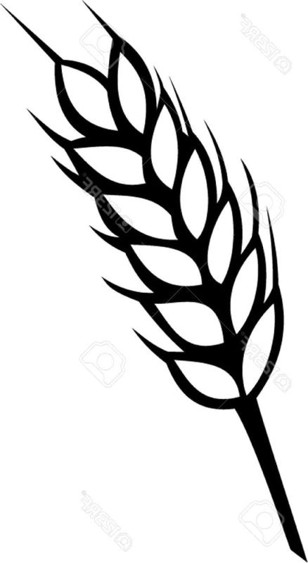 438x800 Wheat Clipart