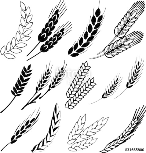 478x500 Wheat Ears Stock Image And Royalty Free Vector Files On Fotolia