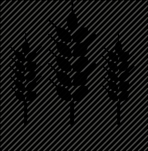 501x512 Farming, Nature, Plant, Wheat Icon Icon Search Engine