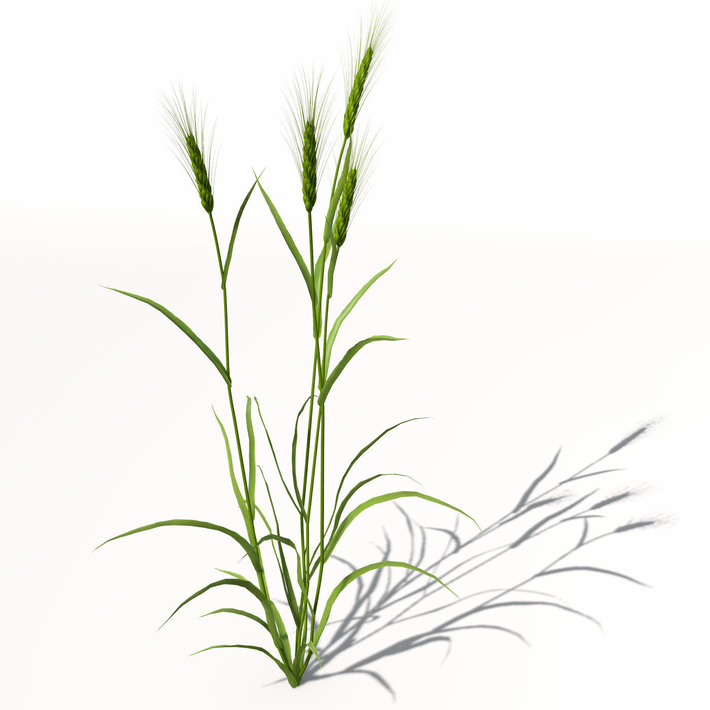 1400x1400 3d Model Xfrogplants Barley Cgtrader