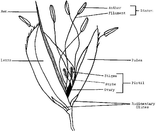 665x558 Rice Production