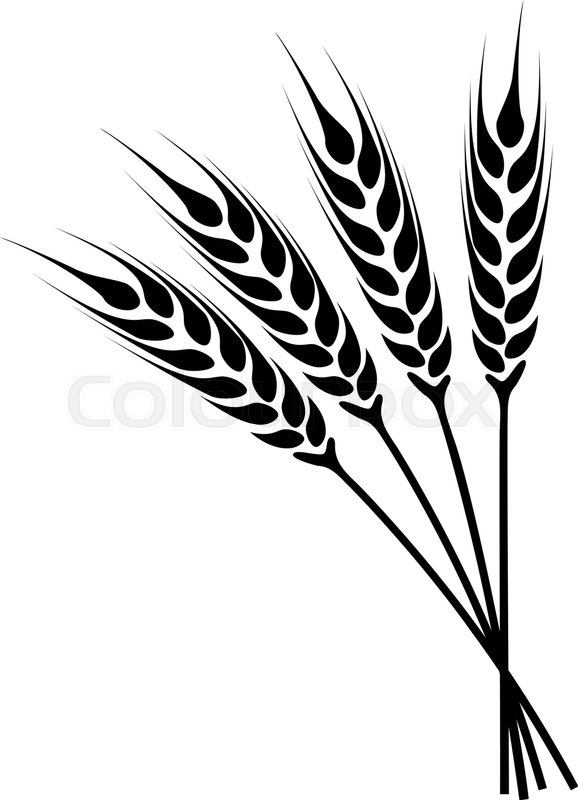 578x800 Silhouette Ears Of Wheat Icon. Crop Symbol Isolated On White