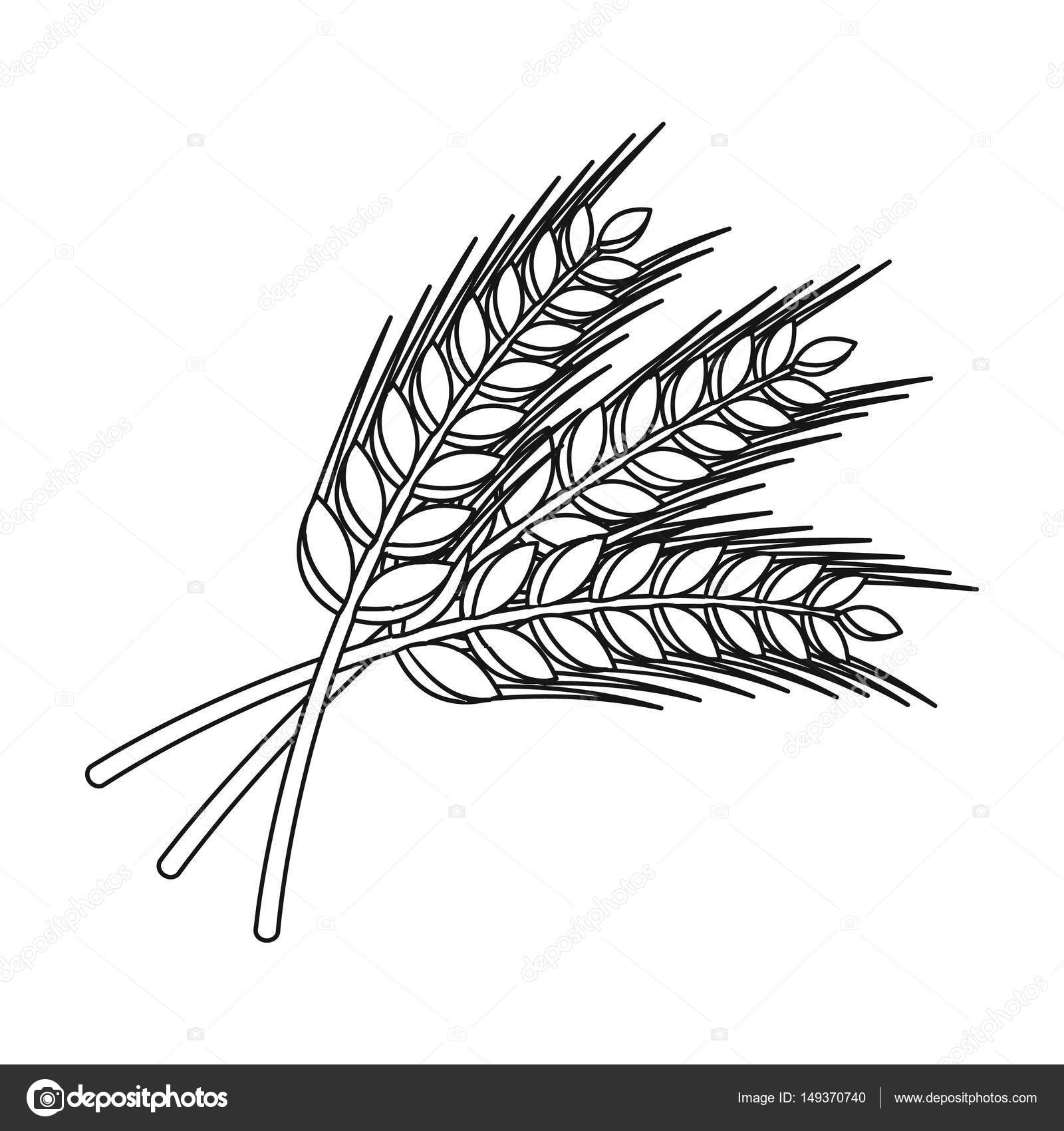 1600x1700 Sprigs Of Wheat. Plant For Brewing Beer. Pub Single Icon