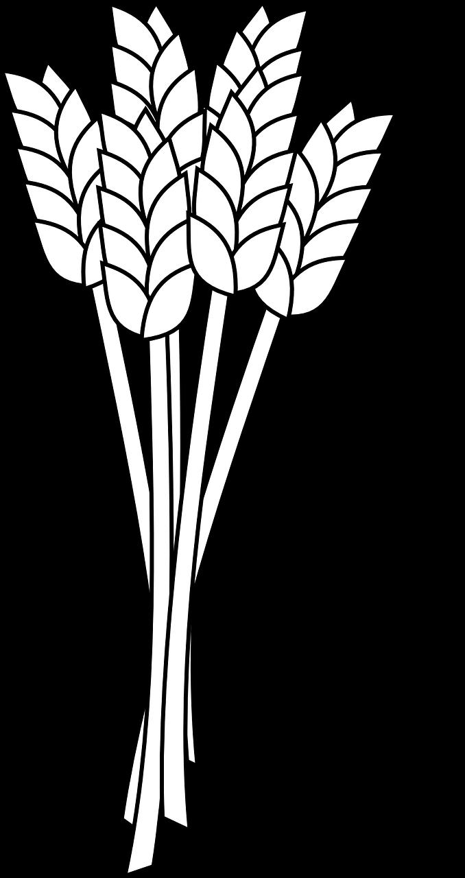678x1280 Wheat Grain Agriculture Crop Transparent Image Grain