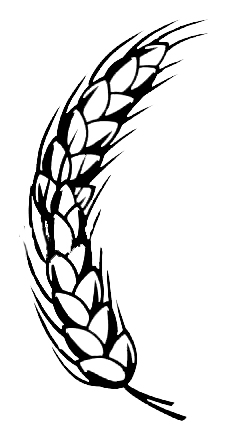 244x433 Wheat Grain Drawing