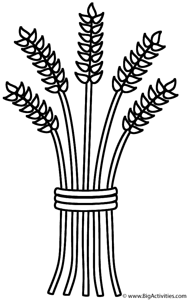 618x992 Wheat Sheaf