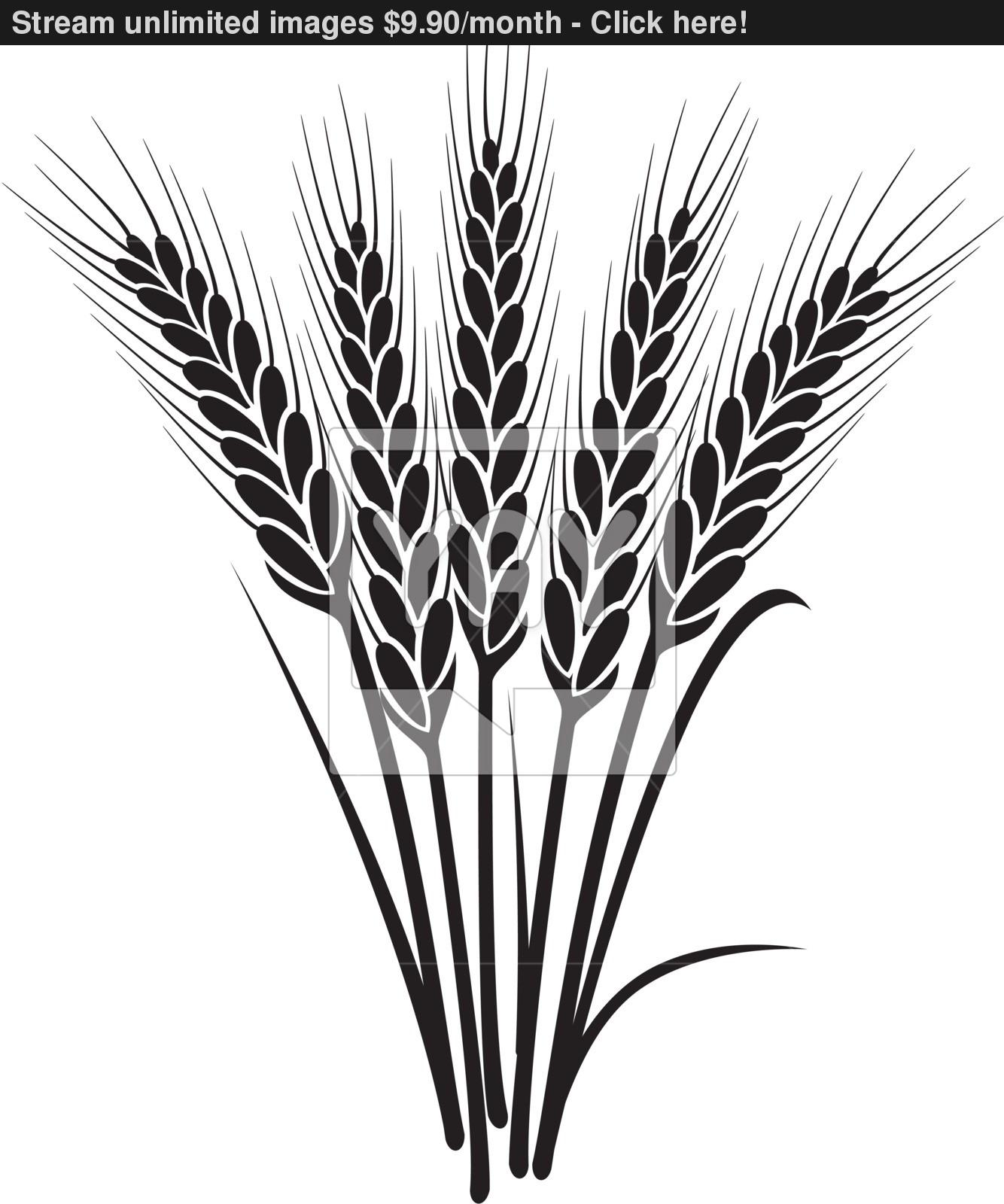 1334x1600 Vector Black And White Bunch Of Wheat Ears Vector
