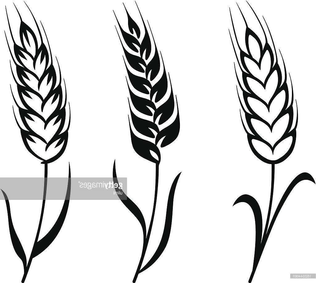 wheat plant drawing at getdrawings com free for personal use wheat rh getdrawings com wheat vector download wheat vector free