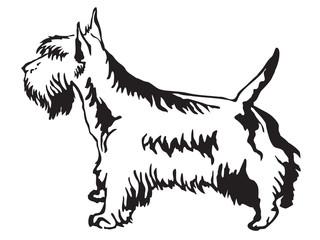 320x240 Search Photos Scottish Terrier