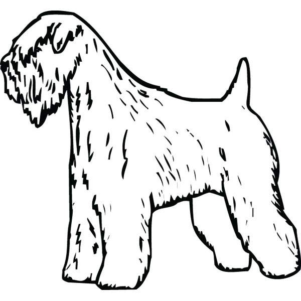 600x600 Soft Coated Wheaten Terrier Dog Art For Engraved Products