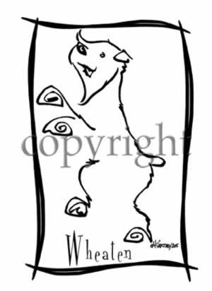 300x412 Soft Coated Wheaten Terrier