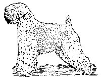 200x160 Soft Coated Wheaten Terrier Body Rubber Stamp