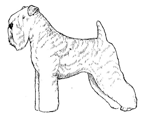 500x409 Breed Standards Soft Coated Wheaten Terrier United Kennel Club