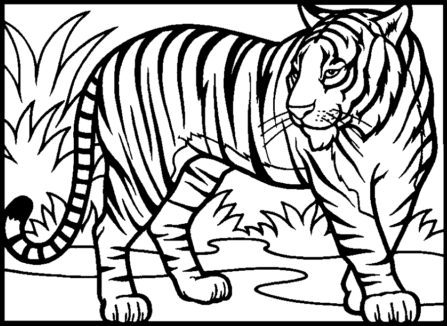Perfect 903x660 Coloring Pages Of Tigers