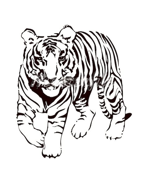 white bengal tiger drawing at getdrawings com free for personal rh getdrawings com bengal tiger head clipart bengal tiger clipart