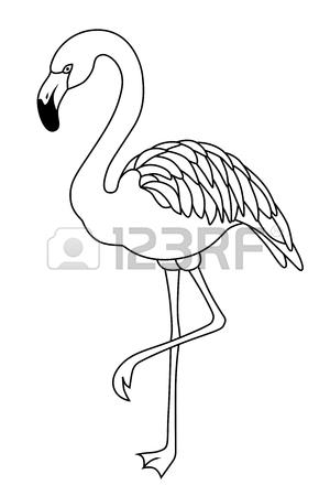 300x450 Flamingo Black White Bird Isolated Illustration Vector Royalty