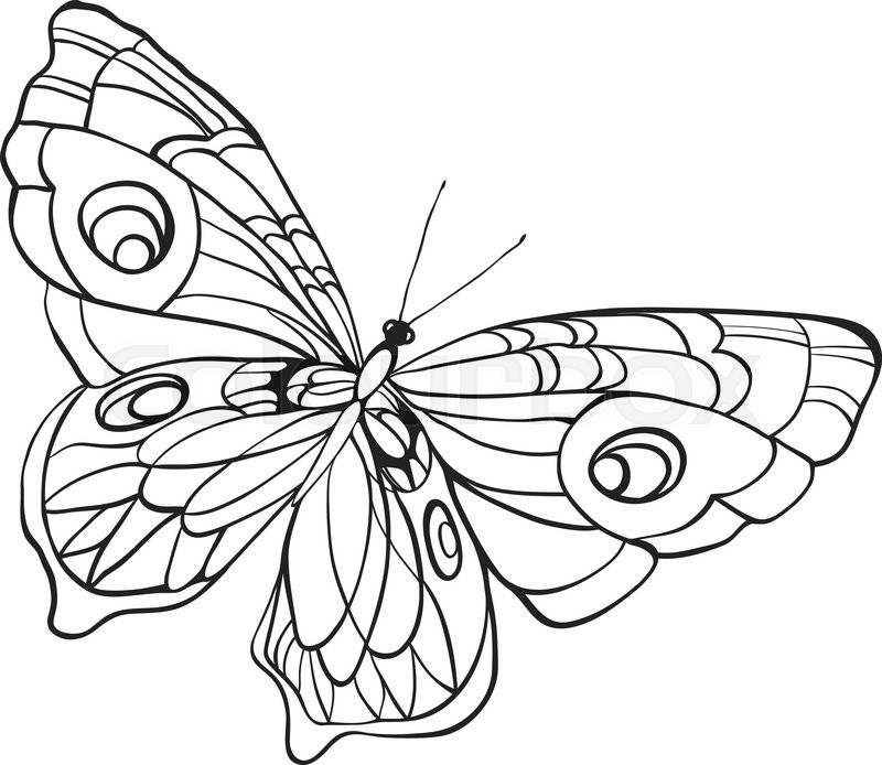 800x694 Black And White Butterfly With Open Wings In A Top View. Sketch