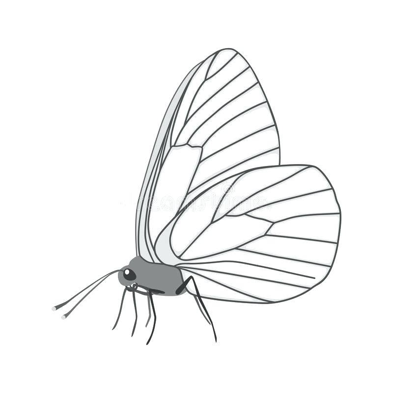 800x800 Butterfly Wing Outline Download Isolated White Butterfly