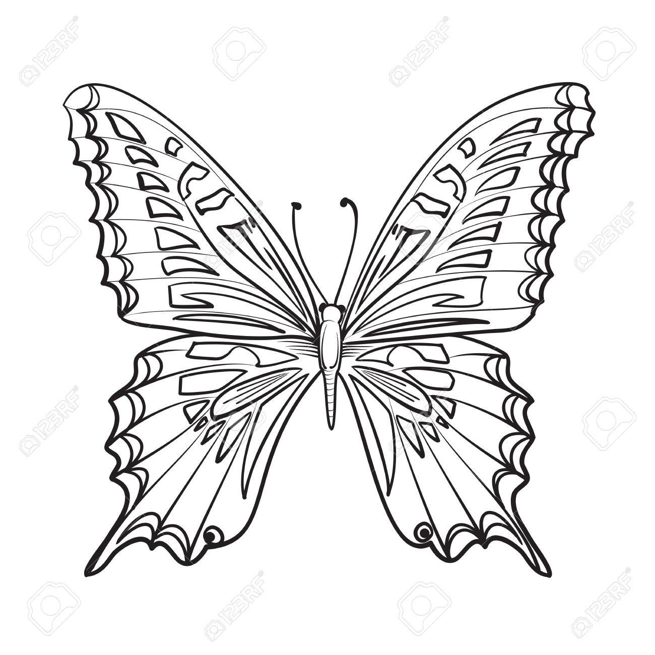 1300x1300 Flying Butterfly Card. Beautiful Black And White Butterfly